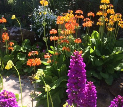 Read more about Plants for Shade